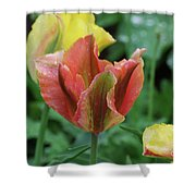 Very Pretty Flowering Pink And Green Striped Tulip Shower Curtain