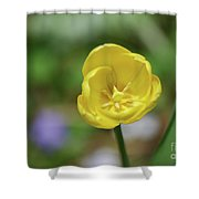 Very Pretty Flowering Yellow Tulip Blooming In A Garden Shower Curtain