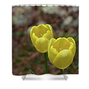 Very Pretty Pair Of Flowering Yellow Tulip Blossoms Shower Curtain