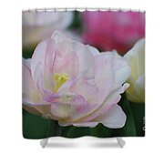 Very Pretty Pale Pink Parrot Tulip Flower Blossom Shower Curtain