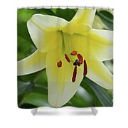 Very Pretty Single Blooming Yellow Daylily Flower Shower Curtain