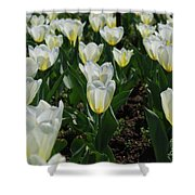 Very Pretty Spring Garden With Flowering White Tulips Shower Curtain
