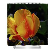 Very Pretty Yellow And Red Tulip Flower Blossom Shower Curtain