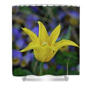 Very Pretty Yellow Tulip With Spikey Petals Shower Curtain