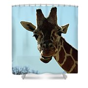 Very Tall Giraffe Shower Curtain