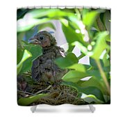Very Young Cardinal Shower Curtain