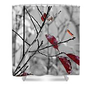 Vestiges Shower Curtain