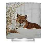 Vexed Vixen - Red Fox Shower Curtain