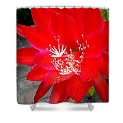 Vibrant Cacti Shower Curtain