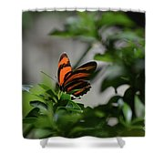 Vibrant Colors To A Orange Oak Tiger Butterfly Shower Curtain