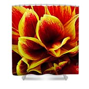 Vibrant Dahlia Petals Shower Curtain