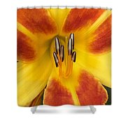 Vibrant Lilly Shower Curtain