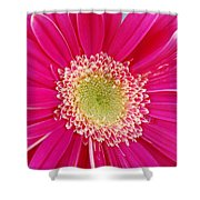 Vibrant Pink Gerber Daisy Shower Curtain