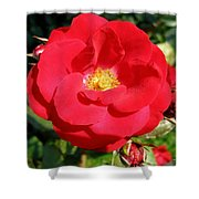 Vibrant Red Rose Shower Curtain