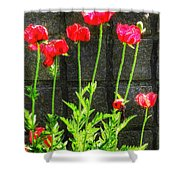 Vibrant Tones Shower Curtain