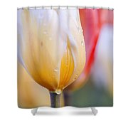 Vibrant Tulips Shower Curtain