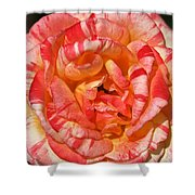 Vibrant Two Toned Rose Shower Curtain