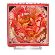 Vibrant Two Toned Rose With Design Shower Curtain