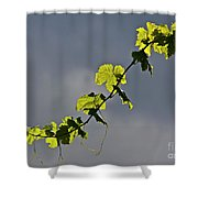 Vibrant Vine Shower Curtain