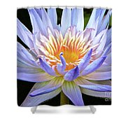 Vibrant White Water Lily Shower Curtain