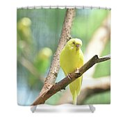 Vibrant Yellow Budgie Parakeet In The Summer Shower Curtain