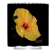 Vibrant Yellow Hibiscus By Kaye Menner Shower Curtain