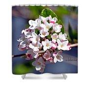 Viburnum Bloom Shower Curtain