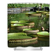 Victoria Amazonica Giant Lily Pads  Shower Curtain