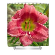 Victoria Grace Daylily Shower Curtain
