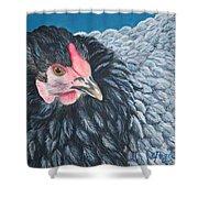 Victoria, Lavender Cochin Chicken Shower Curtain