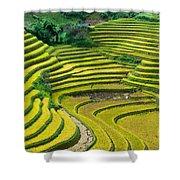 Vietnam Rice Terraces Shower Curtain