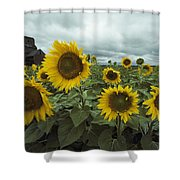View Of A Field Of Sunflowers Shower Curtain
