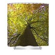 View To The Top Of Beech Tree Shower Curtain