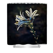 Vignetted Ajo Lily Shower Curtain