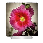 Vignetted Hollyhock Shower Curtain