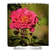 Vignetted  Rose Shower Curtain