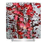 Vignettes - Apples Cider Shower Curtain