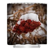 Vignettes - First Snow 1 Shower Curtain