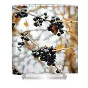 Vignettes - Indigo Winter Berries Shower Curtain