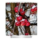 Vignettes - Snow Fruit Shower Curtain