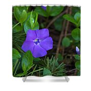 Vinca Blooming In The Forest Shower Curtain