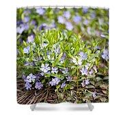 Vinca Violet Purple Clump Shower Curtain