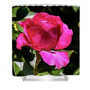 Vincent Red Rose Shower Curtain
