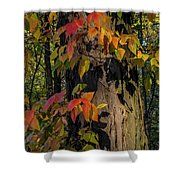 Vine And Hickory Shower Curtain