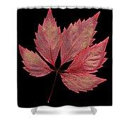 Vine Leaf Shower Curtain