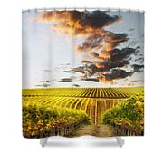 Vineard Aglow Shower Curtain by Sharon Foster
