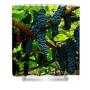Vines Shower Curtain