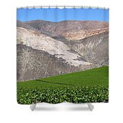 Vineyards In The Atacama Desert Chile Shower Curtain