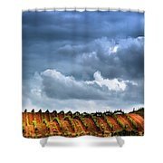 Vineyard 01 Shower Curtain