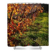 Vineyard 13 Shower Curtain